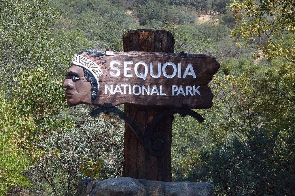 02_sequoia